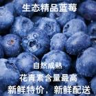 Organic Conversion Premium Fresh Blueberry (12boxes/whole case)