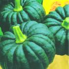 Quality Green Pumpkin