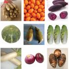Eco Vegetables Winter Seanonal Value Package