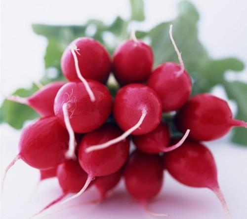 """迷你红萝卜是萝卜的一种,体型娇小可爱,为""""十字花科萝卜属"""",一,二年"""